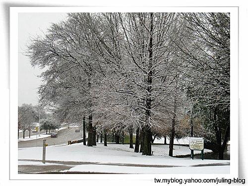 2011雪景10.jpg