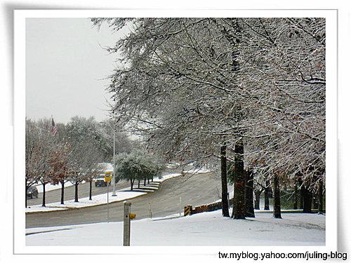 2011雪景11.jpg