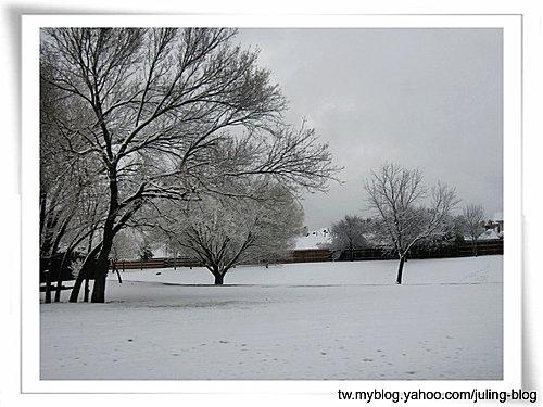 2011雪景13.jpg