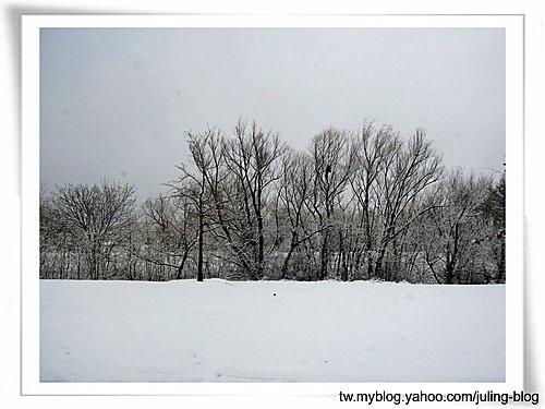 2011雪景14.jpg