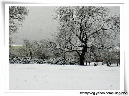2011雪景22.jpg