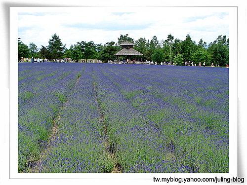 北海道之旅(二) 富田農場2.jpg