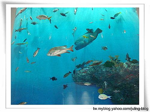 登別海洋公園尼克斯12.jpg