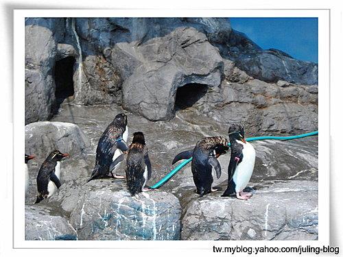 登別海洋公園尼克斯14.jpg
