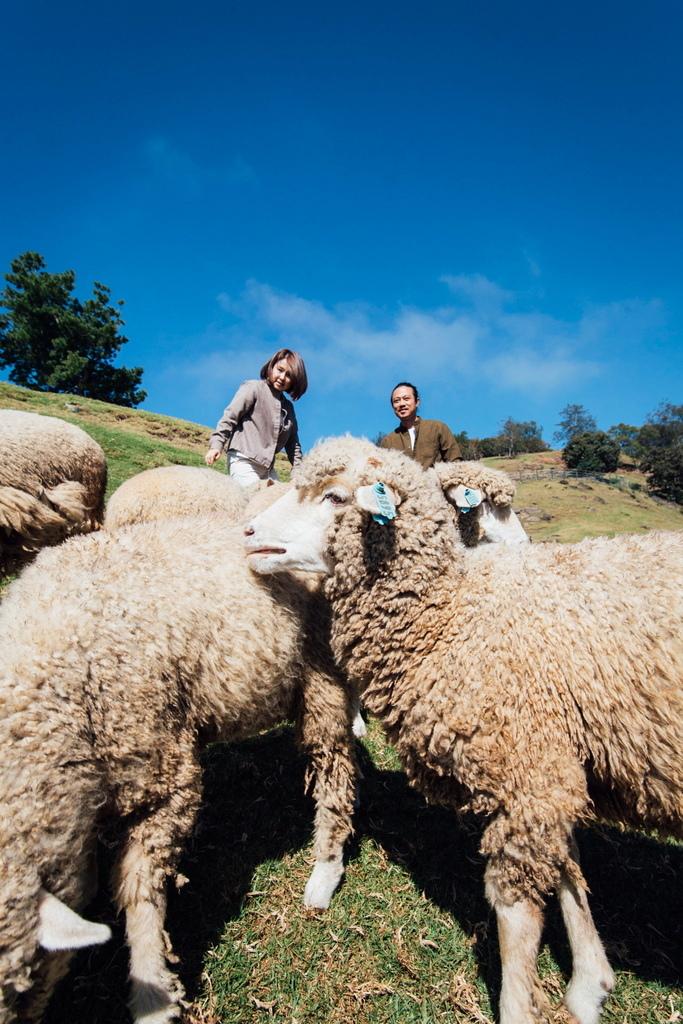 清境農場 青青草原兒童寫真 RuMax拍攝
