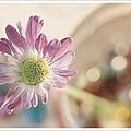 꾸미기_For_All_Seasons_by_vi_ol_et.jpg