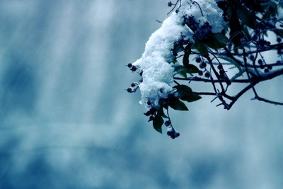 Snow_covered_branch
