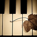 Melodies_on_white_keys