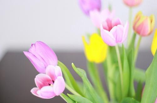꾸미기_Tulips