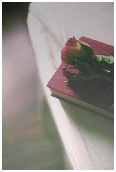 꾸미기_rose