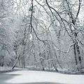 pure_white