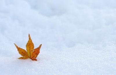 꾸미기_leaves