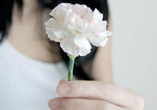 _Carnation_by_roseonthegrey.jpg