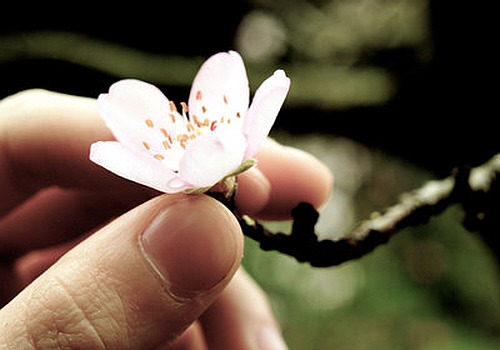 spring_touch__by_m0thyyku.jpg