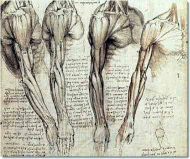 leonardo-da-vinci-anatomy.4.jpg