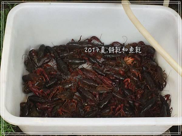 大里古城IMG_0186.JPG