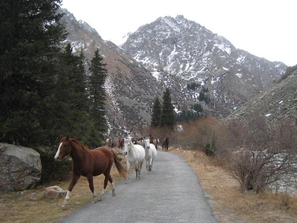 Kyrgyzstan Ala Archa Glacier
