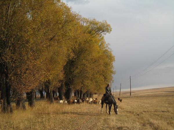 Issyk Kul herding scene by the foot of Tianshan
