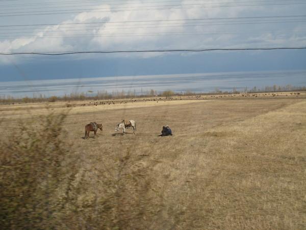 Issyk Kul herding scene near lakeshore