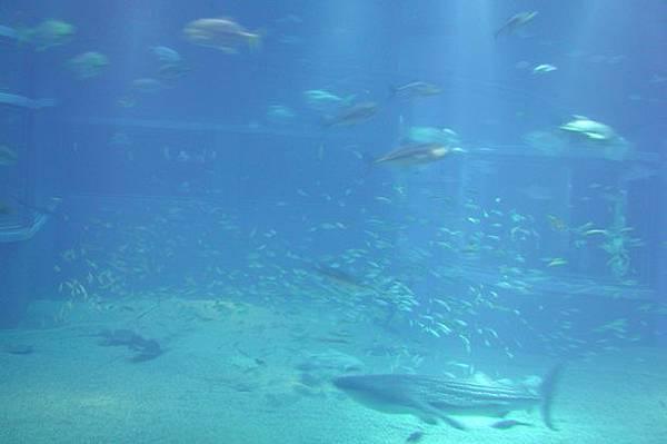 2003.02.27-大阪海游館.JPG