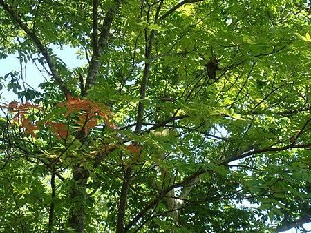 0711081-大沼公園的些許紅葉.JPG