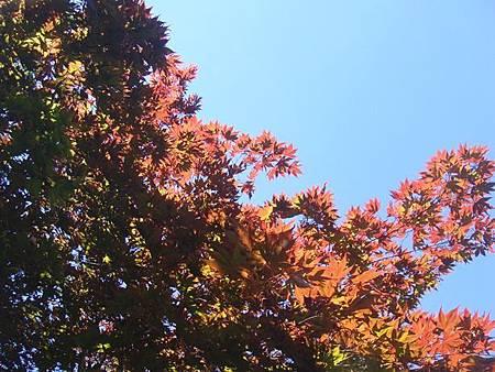 0711119-大沼公園.JPG