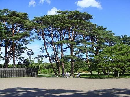 0711290-箱館奉行所旁的參天大樹.JPG