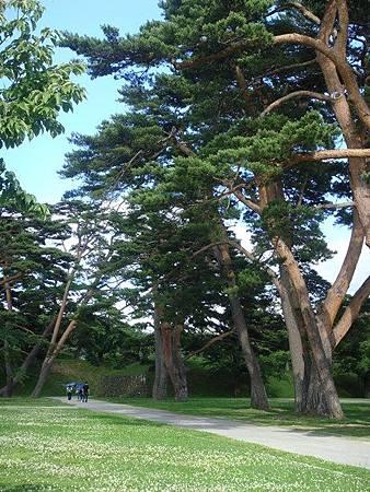 0711317-箱館奉行所旁遍布小花的草地與大樹.JPG