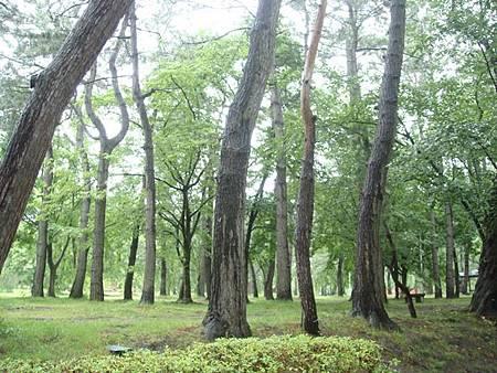 0714040-下大雨的弘前公園.JPG