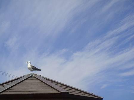 0716203-海鷗.JPG