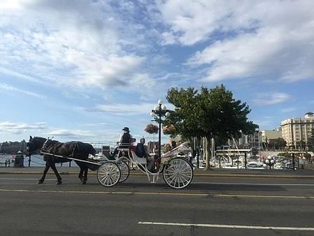 0715459-Victoria的市區觀光馬車R.JPG