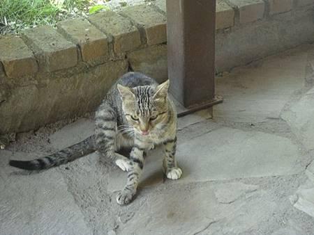 0710097-來去自如的貓.JPG