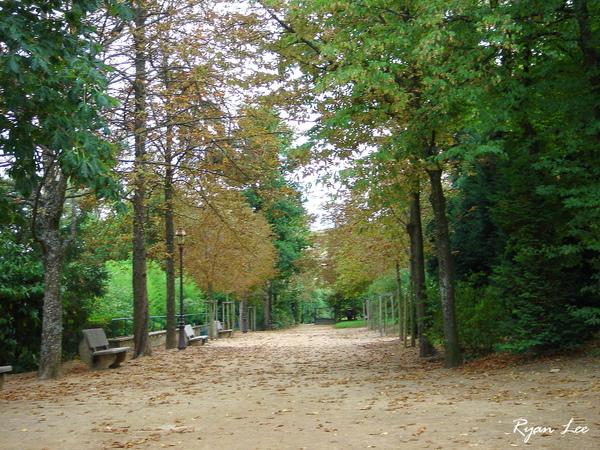 旁邊的樹林