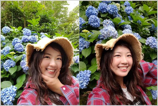 高山青農場(繡球花花季) (35)
