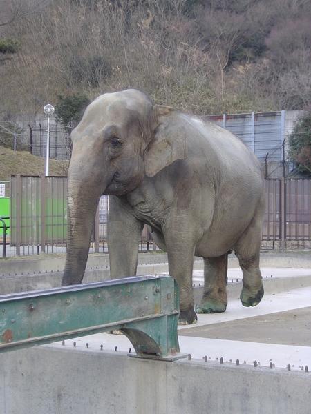 孤單的象!因為只有一隻