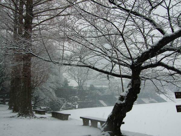等待春天來臨的樹兒
