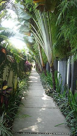 通往各個間的走道,種滿很多植栽