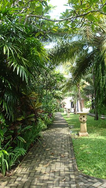 這飯店的植栽造景真的很用心,各式各樣植物都有