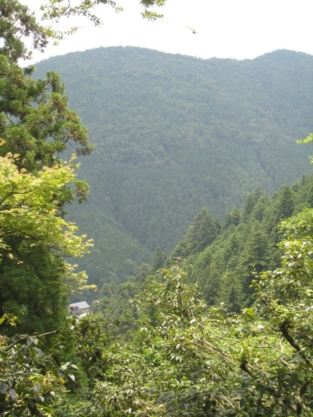 山腰上看到的景色之二