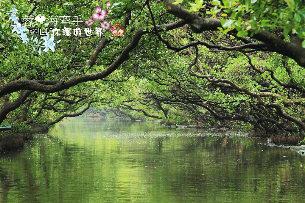 台南景點-四草綠色隧道