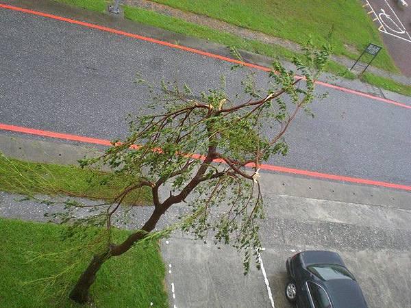 凡那比颱風6