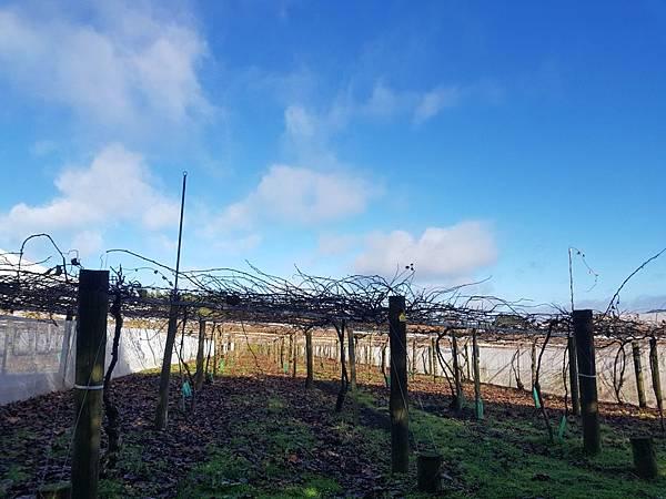 20180711 Kiwi Pruning 001.jpg