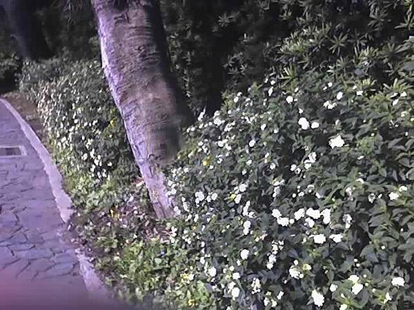 路邊野草花