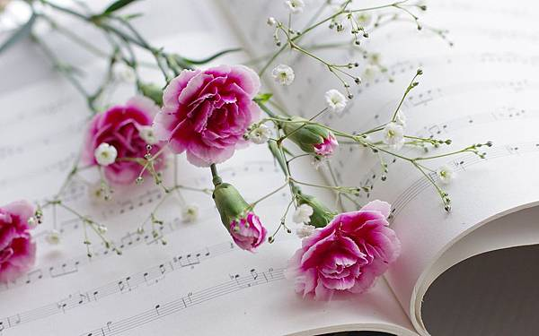 Carnations-flowers-book-musical-scores_1920x1200
