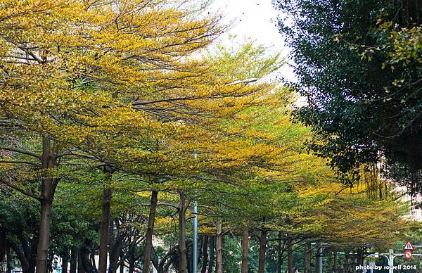 台北 行道樹 嚴尚文拍攝