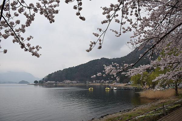 日本 河口湖 老男人拍攝-2
