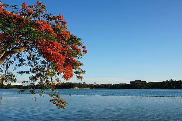 澄清湖畔 三流俠拍攝