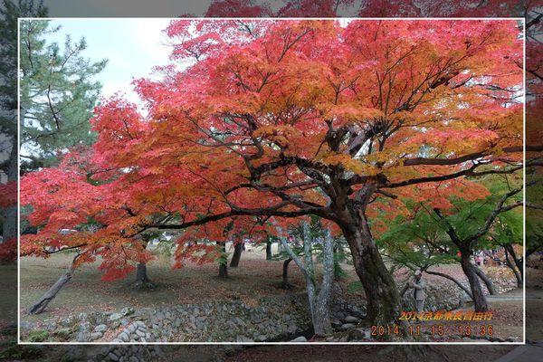 日本 奈良 十分拍攝