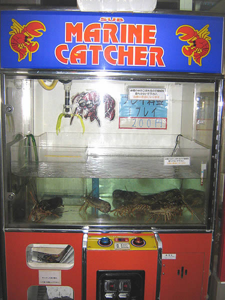 a96684_lobster.jpg