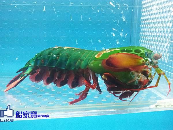 螃蟹館4.jpg